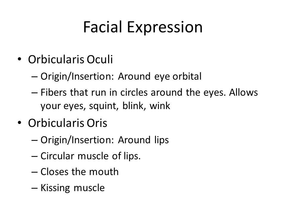 Facial Expression Orbicularis Oculi – Origin/Insertion: Around eye orbital – Fibers that run in circles around the eyes.