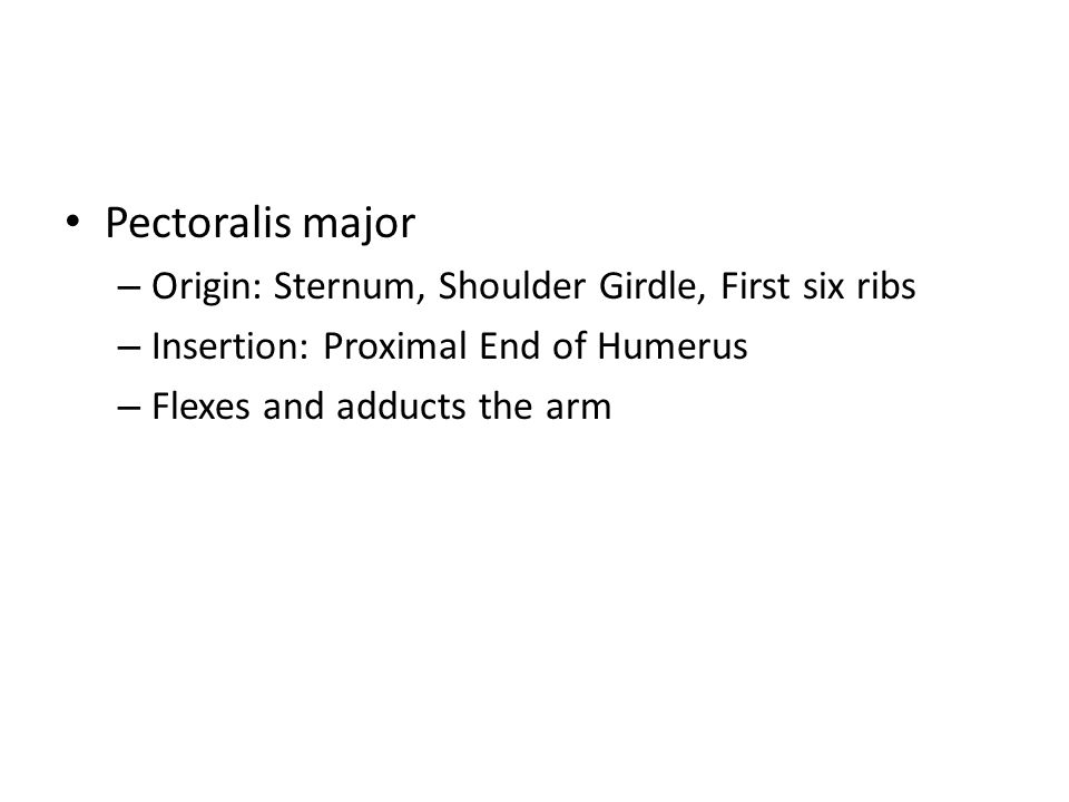 Pectoralis major – Origin: Sternum, Shoulder Girdle, First six ribs – Insertion: Proximal End of Humerus – Flexes and adducts the arm