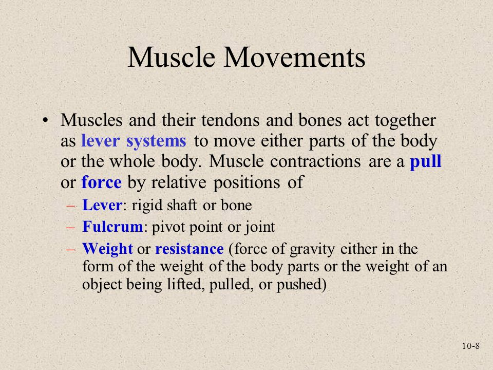 10-8 Muscle Movements Muscles and their tendons and bones act together as lever systems to move either parts of the body or the whole body. Muscle con