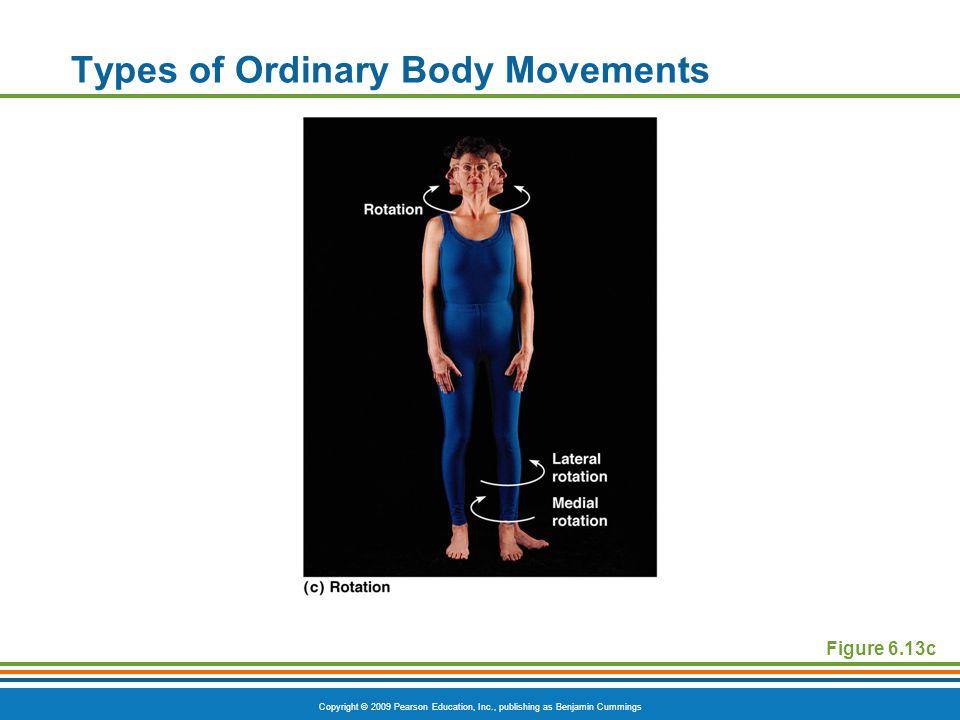 Copyright © 2009 Pearson Education, Inc., publishing as Benjamin Cummings Types of Ordinary Body Movements Figure 6.13c