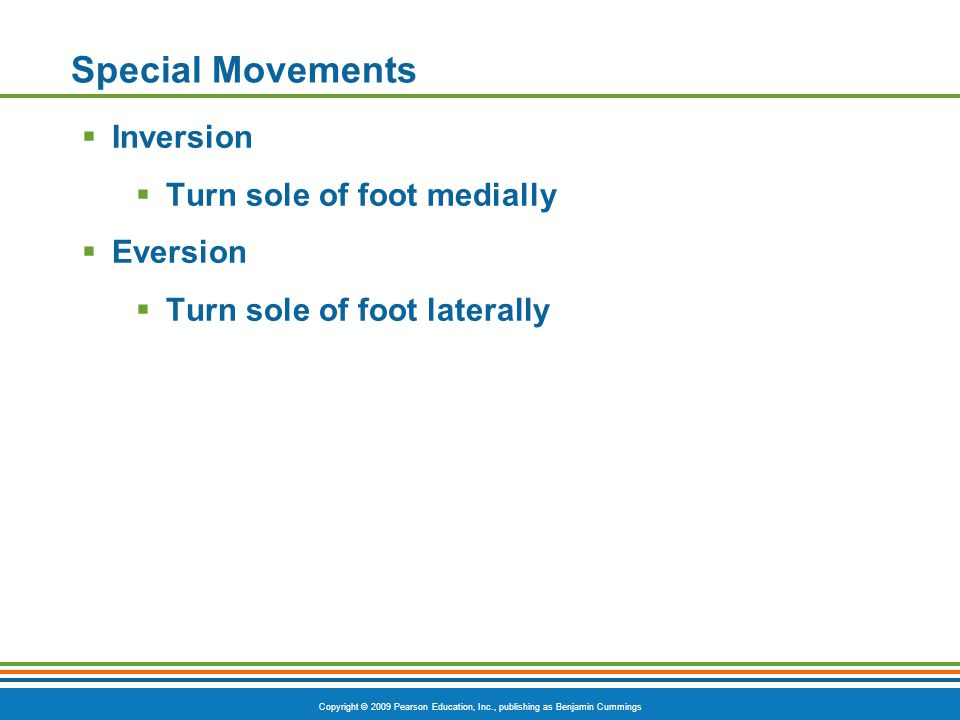 Copyright © 2009 Pearson Education, Inc., publishing as Benjamin Cummings Special Movements  Inversion  Turn sole of foot medially  Eversion  Turn