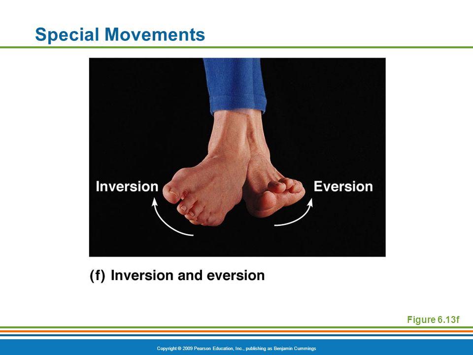 Copyright © 2009 Pearson Education, Inc., publishing as Benjamin Cummings Special Movements Figure 6.13f