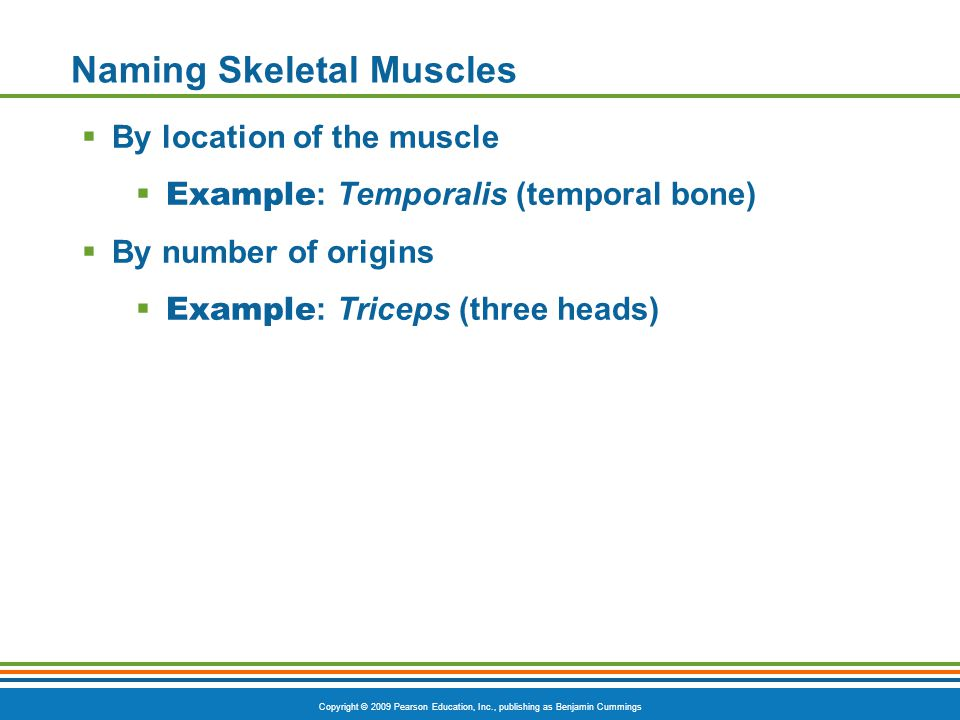 Copyright © 2009 Pearson Education, Inc., publishing as Benjamin Cummings Naming Skeletal Muscles  By location of the muscle  Example : Temporalis (