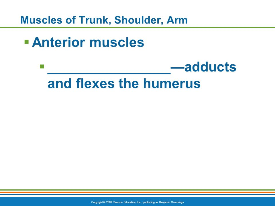 Copyright © 2009 Pearson Education, Inc., publishing as Benjamin Cummings Muscles of Trunk, Shoulder, Arm  Anterior muscles  ________________—adduct