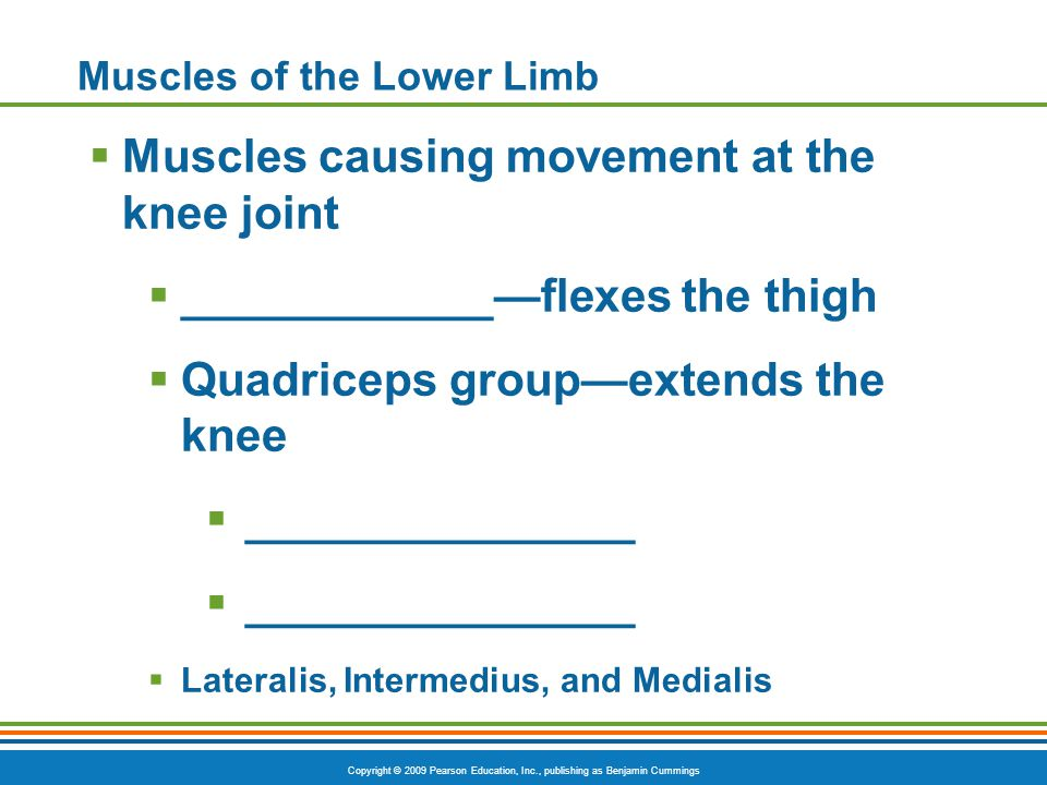 Copyright © 2009 Pearson Education, Inc., publishing as Benjamin Cummings Muscles of the Lower Limb  Muscles causing movement at the knee joint  ___