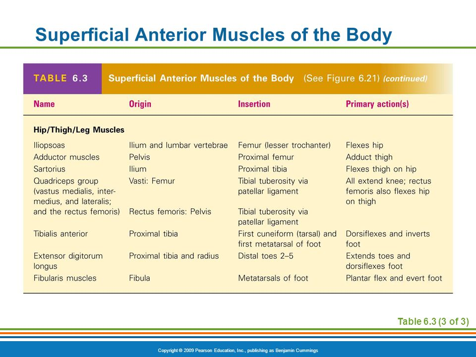 Copyright © 2009 Pearson Education, Inc., publishing as Benjamin Cummings Superficial Anterior Muscles of the Body Table 6.3 (3 of 3)
