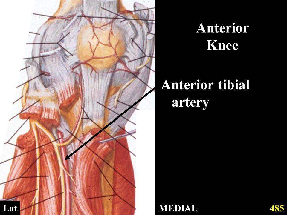Anterior Knee Anterior tibial artery MEDIAL485Lat
