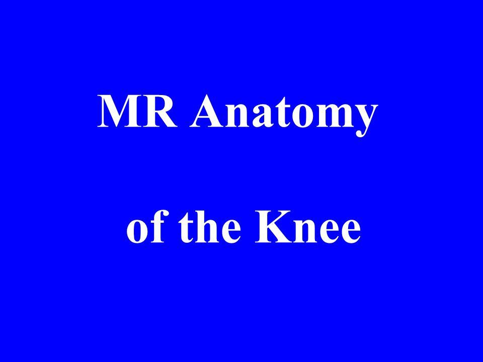 MR Anatomy of the Knee