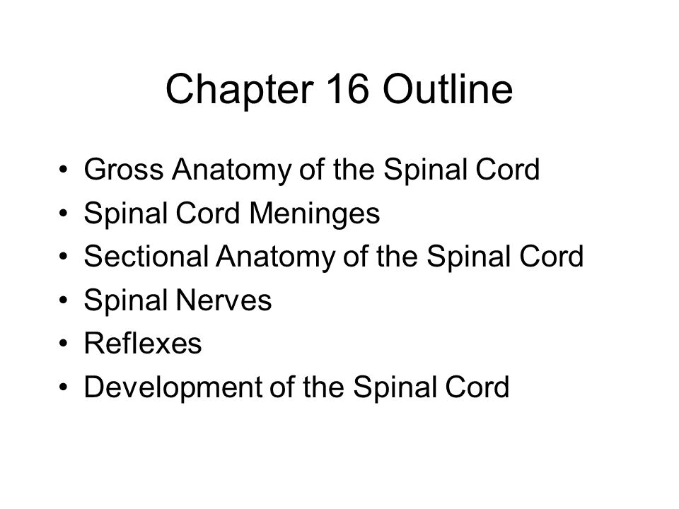 Chapter 16 Outline Gross Anatomy of the Spinal Cord Spinal Cord Meninges Sectional Anatomy of the Spinal Cord Spinal Nerves Reflexes Development of the Spinal Cord