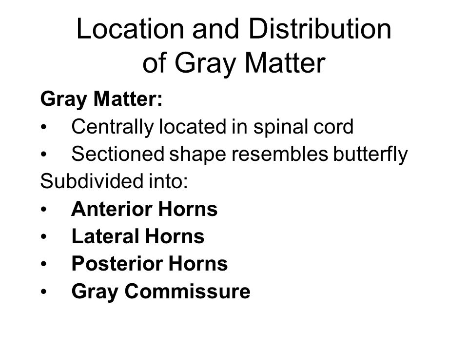 Location and Distribution of Gray Matter Gray Matter: Centrally located in spinal cord Sectioned shape resembles butterfly Subdivided into: Anterior Horns Lateral Horns Posterior Horns Gray Commissure
