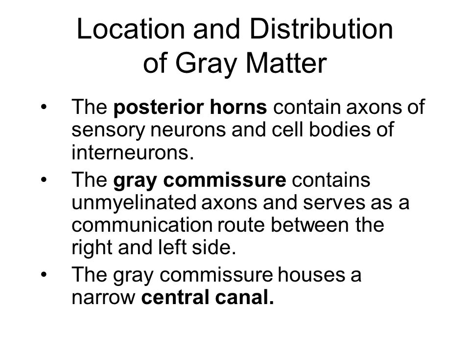 Location and Distribution of Gray Matter The posterior horns contain axons of sensory neurons and cell bodies of interneurons. The gray commissure con