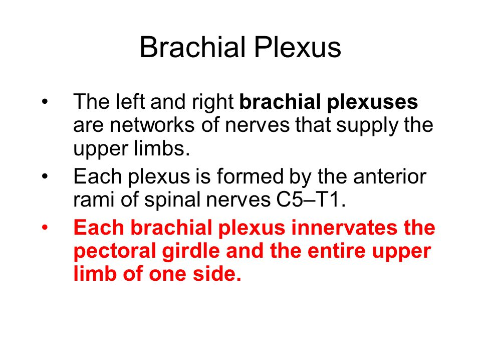 Brachial Plexus The left and right brachial plexuses are networks of nerves that supply the upper limbs.