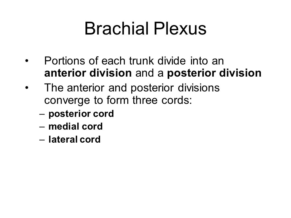 Brachial Plexus Portions of each trunk divide into an anterior division and a posterior division The anterior and posterior divisions converge to form three cords: –posterior cord –medial cord –lateral cord