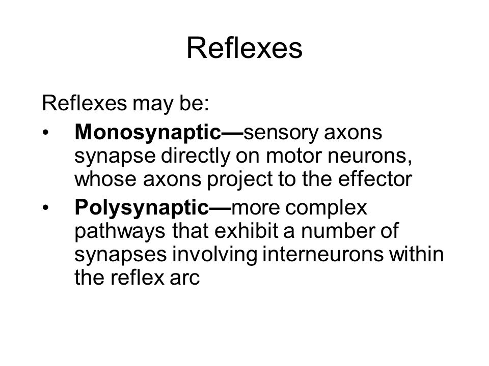 Reflexes Reflexes may be: Monosynaptic—sensory axons synapse directly on motor neurons, whose axons project to the effector Polysynaptic—more complex