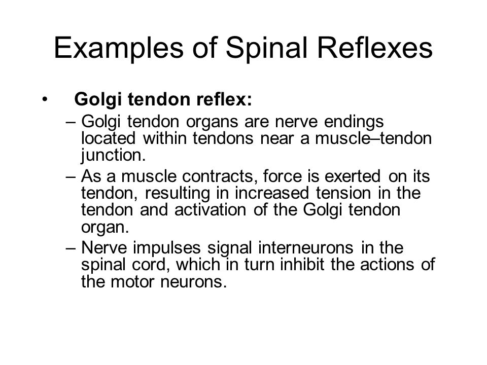 Examples of Spinal Reflexes Golgi tendon reflex: –Golgi tendon organs are nerve endings located within tendons near a muscle–tendon junction. –As a mu