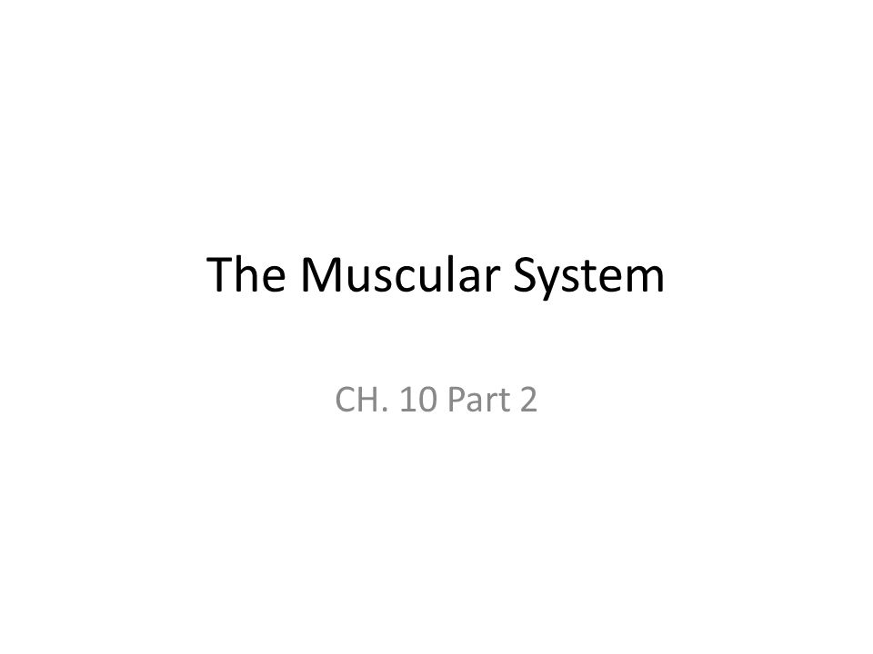 The Muscular System CH. 10 Part 2
