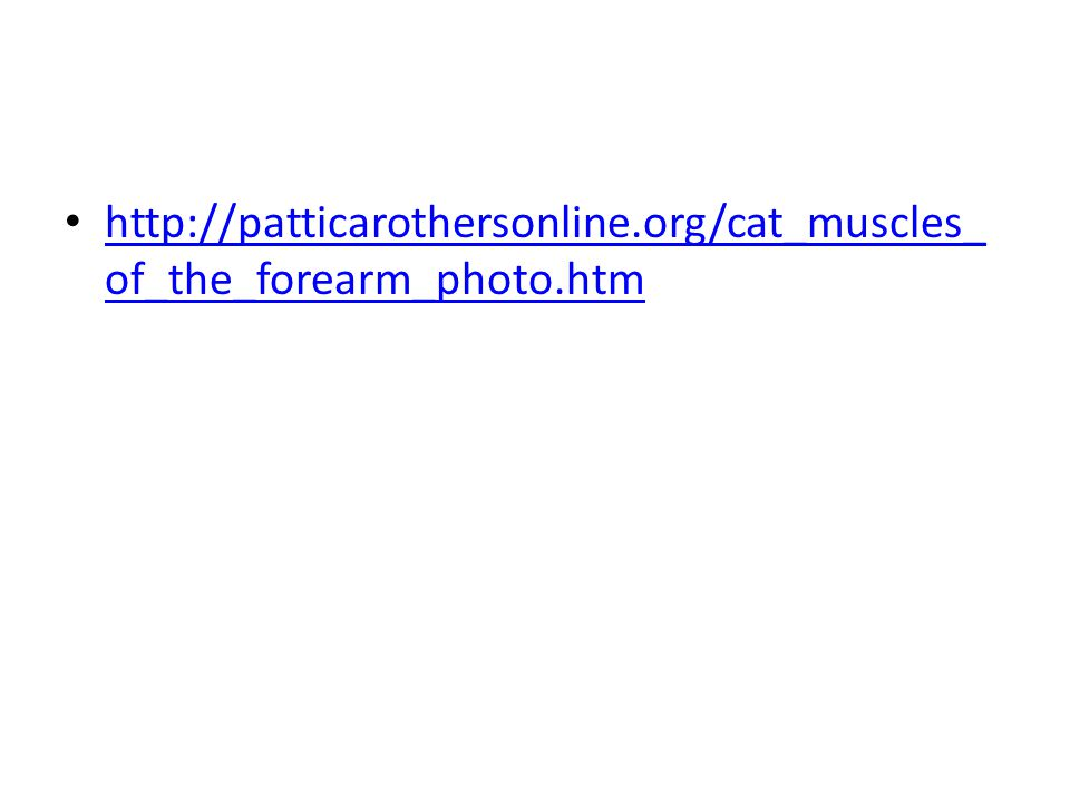 http://patticarothersonline.org/cat_muscles_ of_the_forearm_photo.htm http://patticarothersonline.org/cat_muscles_ of_the_forearm_photo.htm