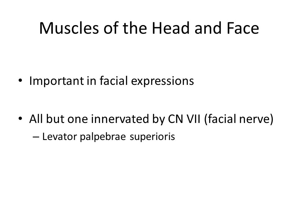 Muscles of the Head and Face Important in facial expressions All but one innervated by CN VII (facial nerve) – Levator palpebrae superioris