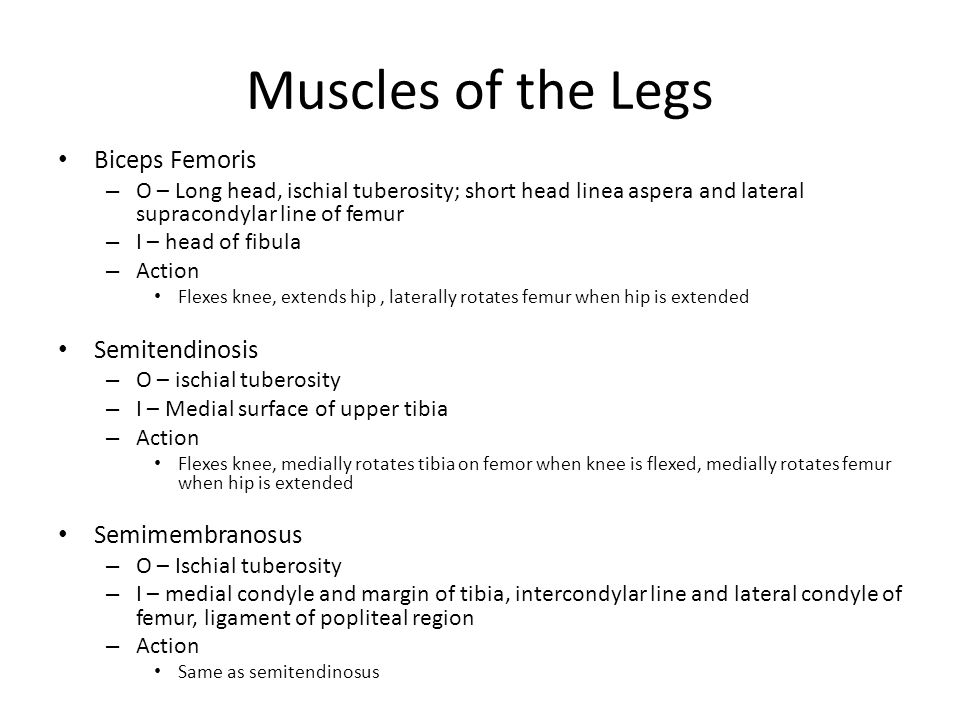 Muscles of the Legs Biceps Femoris – O – Long head, ischial tuberosity; short head linea aspera and lateral supracondylar line of femur – I – head of fibula – Action Flexes knee, extends hip, laterally rotates femur when hip is extended Semitendinosis – O – ischial tuberosity – I – Medial surface of upper tibia – Action Flexes knee, medially rotates tibia on femor when knee is flexed, medially rotates femur when hip is extended Semimembranosus – O – Ischial tuberosity – I – medial condyle and margin of tibia, intercondylar line and lateral condyle of femur, ligament of popliteal region – Action Same as semitendinosus