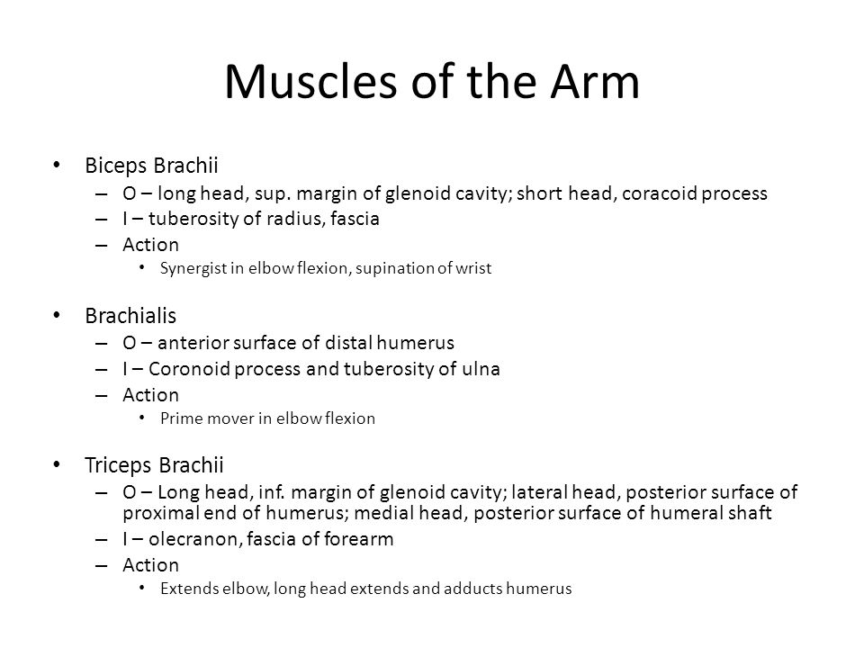 Muscles of the Arm Biceps Brachii – O – long head, sup.
