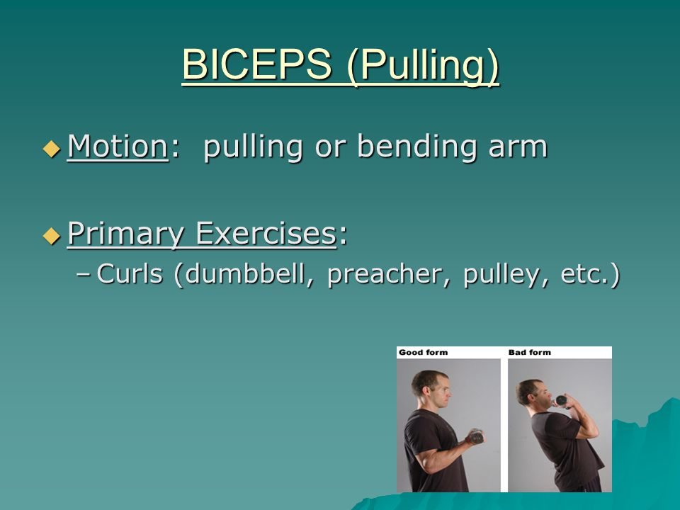 BICEPS (Pulling)  Motion: pulling or bending arm  Primary Exercises: –Curls (dumbbell, preacher, pulley, etc.)