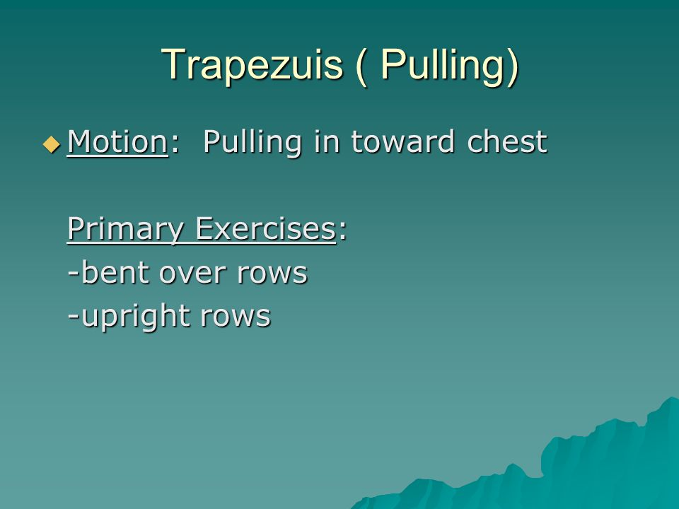 Trapezuis ( Pulling)  Motion: Pulling in toward chest Primary Exercises: -bent over rows -upright rows