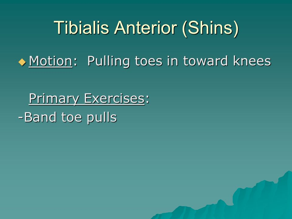 Tibialis Anterior (Shins)  Motion: Pulling toes in toward knees Primary Exercises: -Band toe pulls