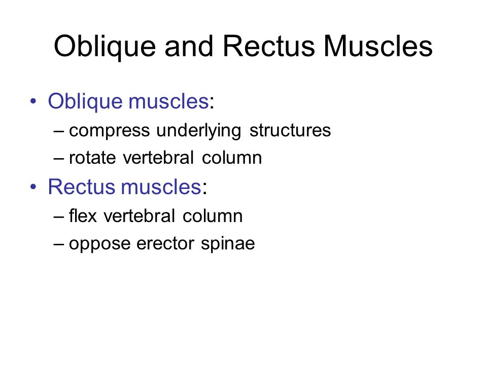 Oblique and Rectus Muscles Oblique muscles: –compress underlying structures –rotate vertebral column Rectus muscles: –flex vertebral column –oppose er