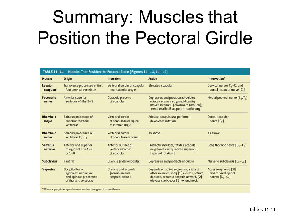 Muscles that Move the Arm Figure 11–15b