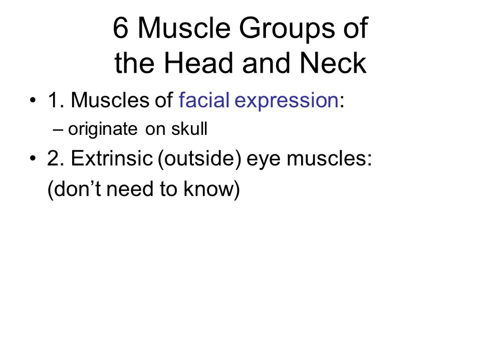 6 Muscle Groups of the Head and Neck 3.Muscles of mastication: –move the mandible 4.
