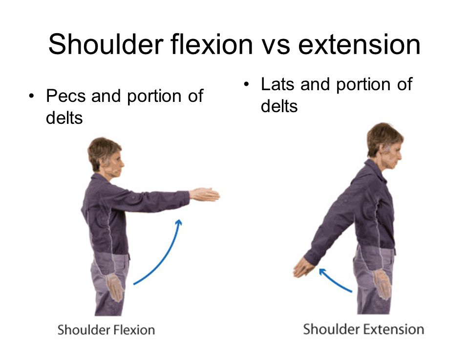 The Rotator Cuff Muscles involved in shoulder rotation –supraspinatus, subscapularis, infraspinatus, teres minor,and their tendons