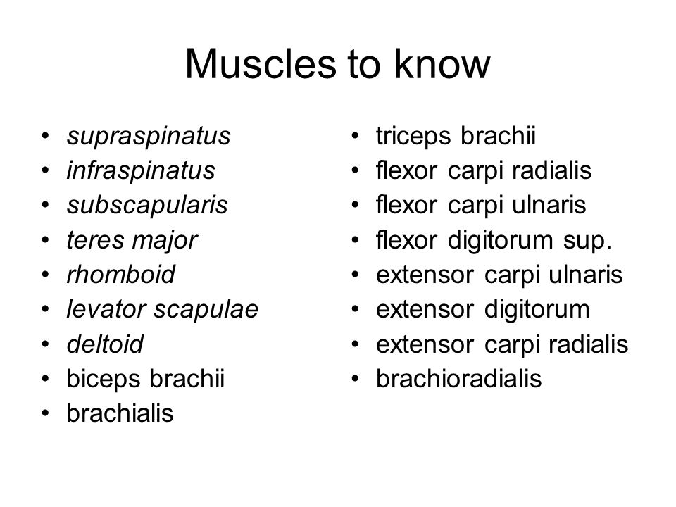 Muscles that Move the Arm Figure 11–15a