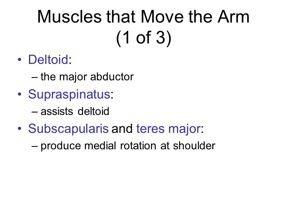 Muscles that Move the Arm (2 of 3) Infraspinatus: –produce lateral rotation at shoulder