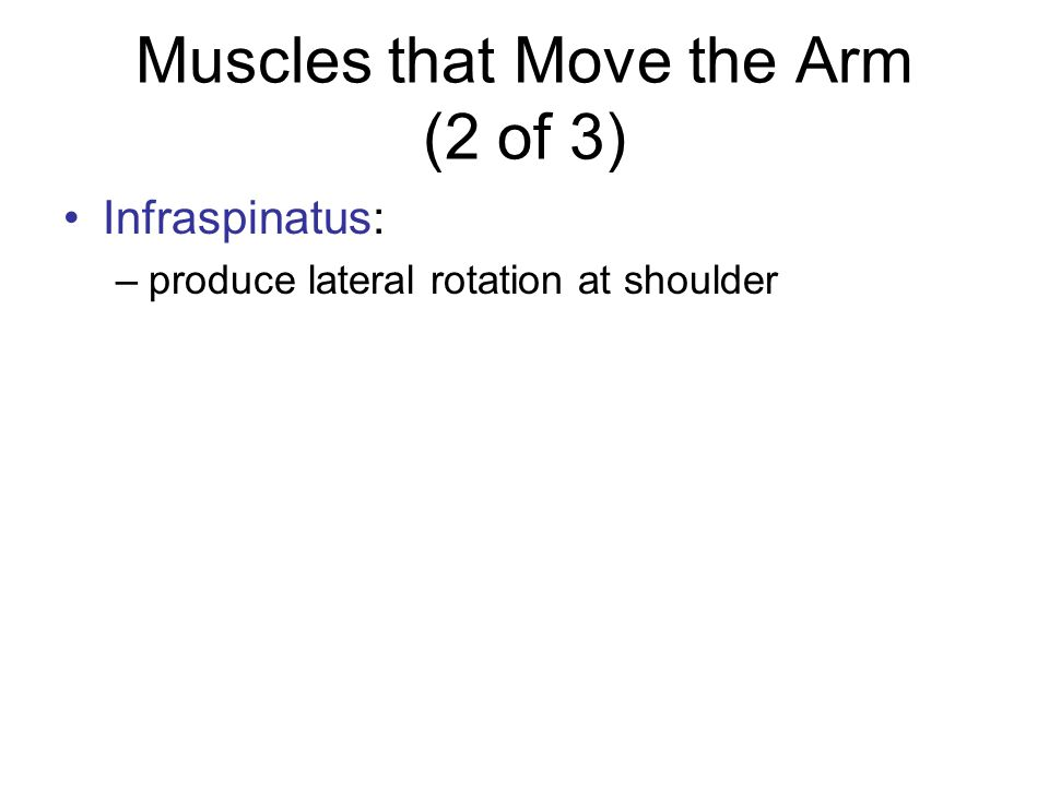 Muscles that Move the Arm (3 of 3) Pectoralis major: –between anterior chest and greater tubercle of humerus –produces flexion at shoulder joint Latissimus dorsi: –between thoracic vertebrae and humerus –produces extension at shoulder joint