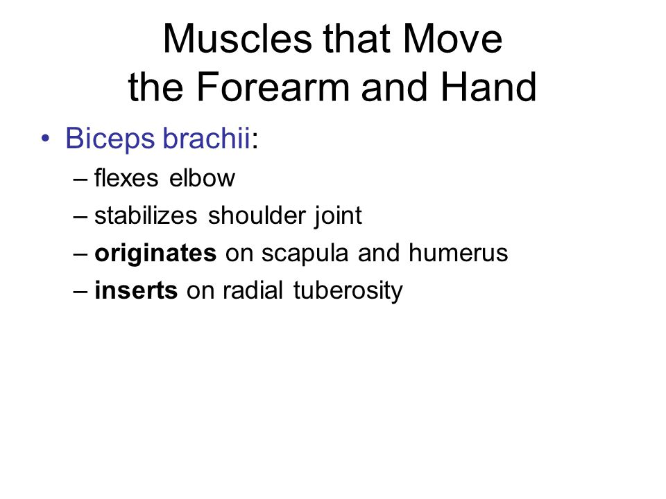 Muscles that Move the Forearm and Hand Triceps brachii: –extends elbow –originates on scapula (three spots) –inserts on olecranon Brachialis and brachioradialis: – assist in flexing elbow (synergists)