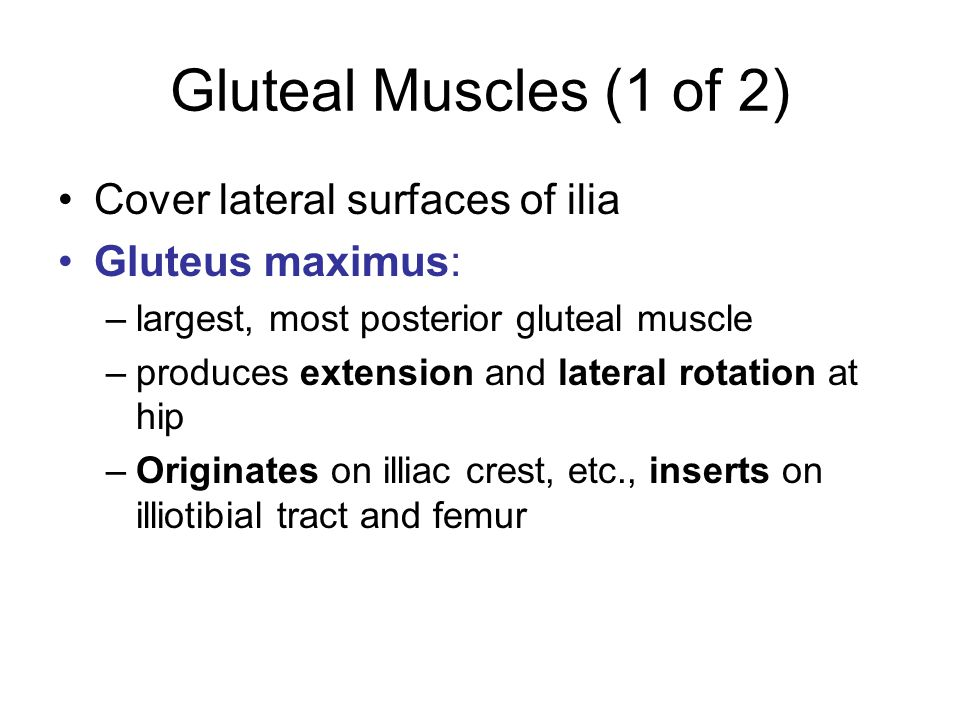 Gluteal Muscles (1 of 2) Cover lateral surfaces of ilia Gluteus maximus: –largest, most posterior gluteal muscle –produces extension and lateral rotat