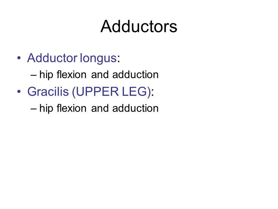 Adductors Adductor longus: –hip flexion and adduction Gracilis (UPPER LEG): –hip flexion and adduction