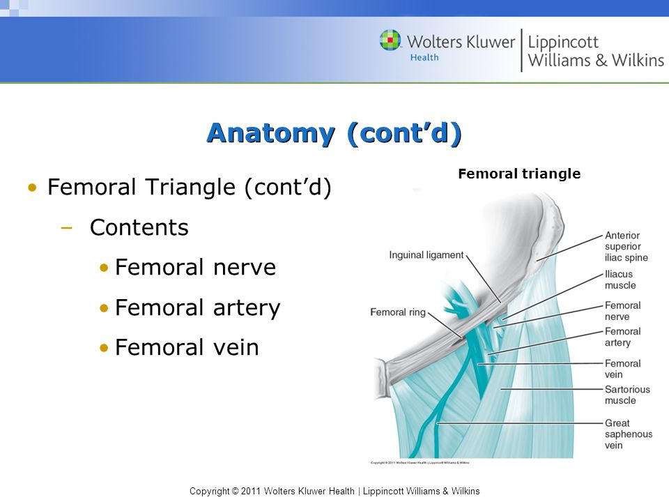 Copyright © 2011 Wolters Kluwer Health | Lippincott Williams & Wilkins Anatomy (cont'd) Femoral Triangle (cont'd) –Contents Femoral nerve Femoral arte