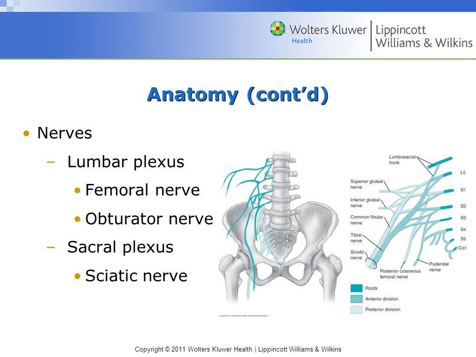 Copyright © 2011 Wolters Kluwer Health   Lippincott Williams & Wilkins Anatomy (cont'd) Nerves –Lumbar plexus Femoral nerve Obturator nerve –Sacral plexus Sciatic nerve