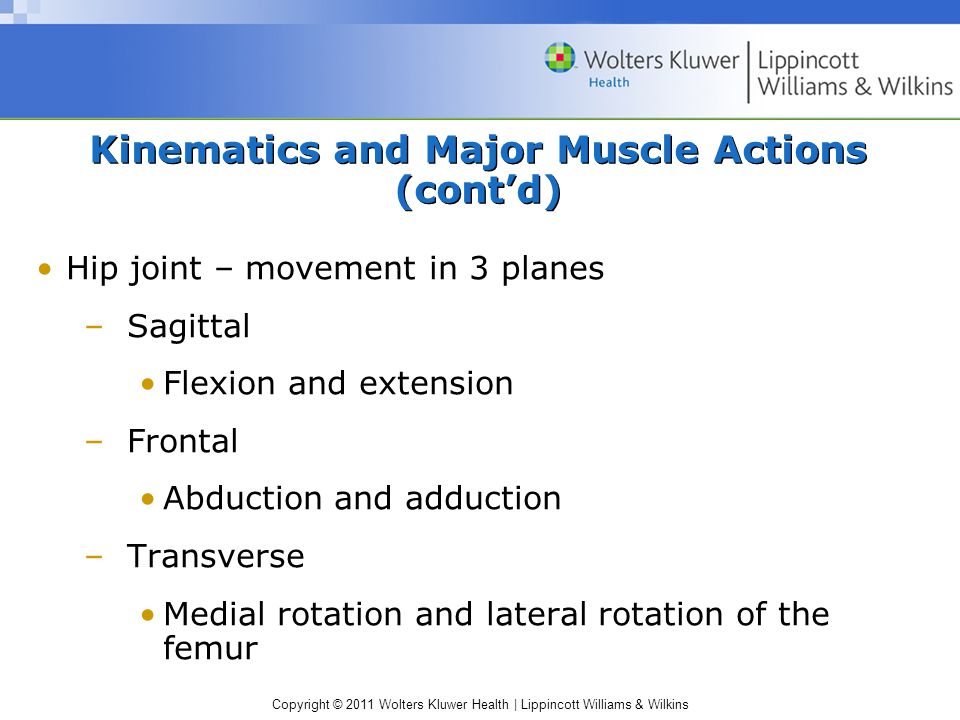 Copyright © 2011 Wolters Kluwer Health | Lippincott Williams & Wilkins Kinematics and Major Muscle Actions (cont'd) Hip joint – movement in 3 planes –