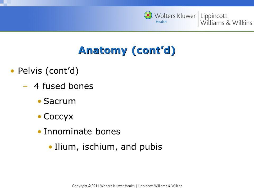 Copyright © 2011 Wolters Kluwer Health   Lippincott Williams & Wilkins Anatomy (cont'd) Pelvis (cont'd) –4 fused bones Sacrum Coccyx Innominate bones Ilium, ischium, and pubis