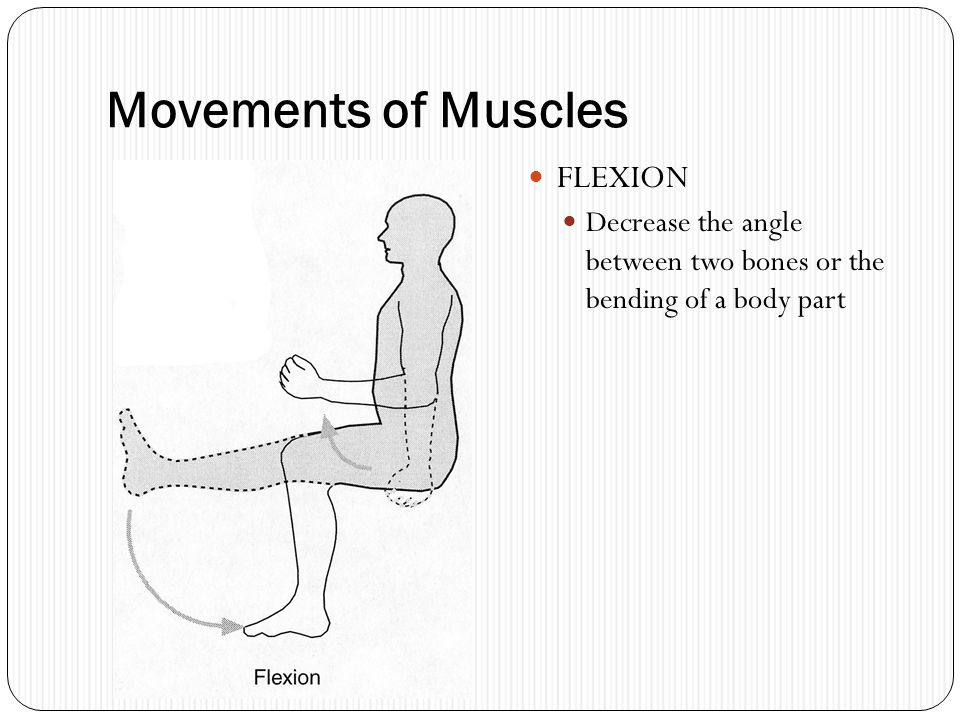 Movements of Muscles FLEXION Decrease the angle between two bones or the bending of a body part