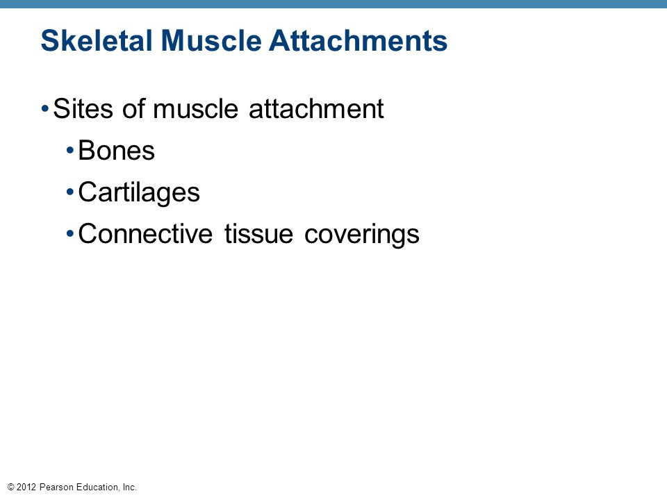 © 2012 Pearson Education, Inc. Skeletal Muscle Attachments Sites of muscle attachment Bones Cartilages Connective tissue coverings