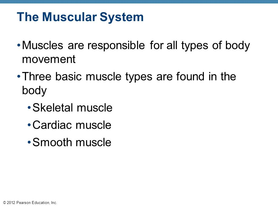 © 2012 Pearson Education, Inc. The Muscular System Muscles are responsible for all types of body movement Three basic muscle types are found in the bo