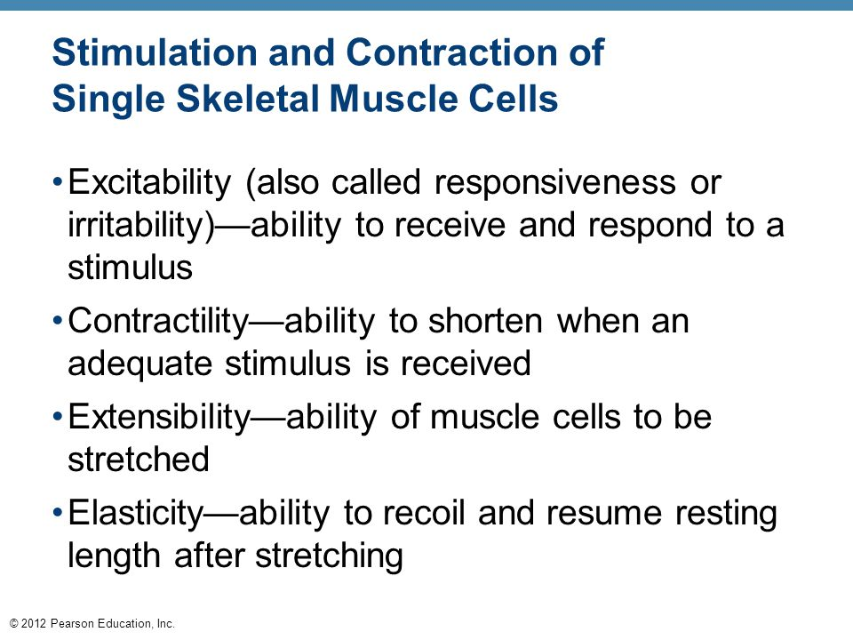 © 2012 Pearson Education, Inc. Stimulation and Contraction of Single Skeletal Muscle Cells Excitability (also called responsiveness or irritability)—a