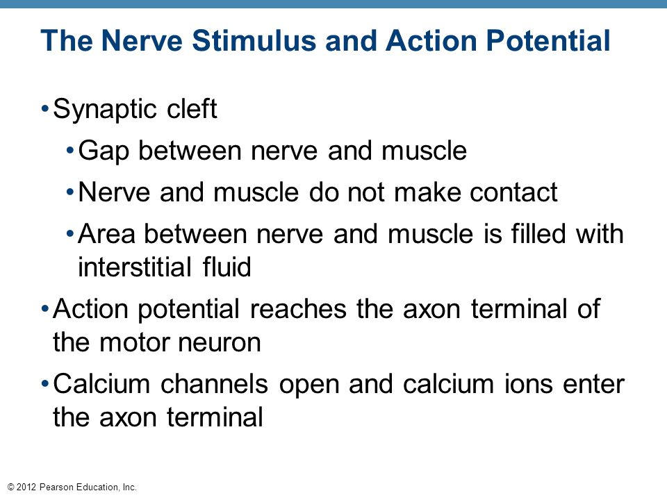 © 2012 Pearson Education, Inc. The Nerve Stimulus and Action Potential Synaptic cleft Gap between nerve and muscle Nerve and muscle do not make contac