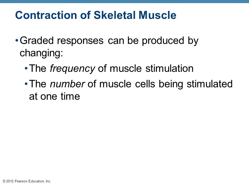 © 2012 Pearson Education, Inc. Contraction of Skeletal Muscle Graded responses can be produced by changing: The frequency of muscle stimulation The nu