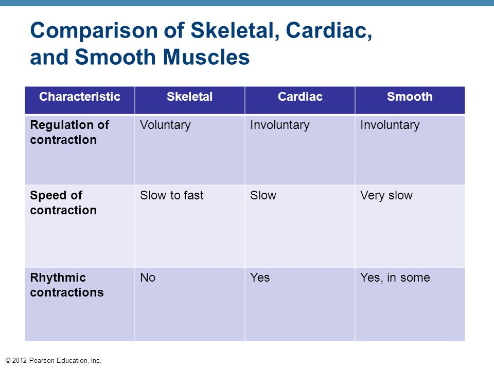 © 2012 Pearson Education, Inc. Comparison of Skeletal, Cardiac, and Smooth Muscles CharacteristicSkeletalCardiacSmooth Regulation of contraction Volun