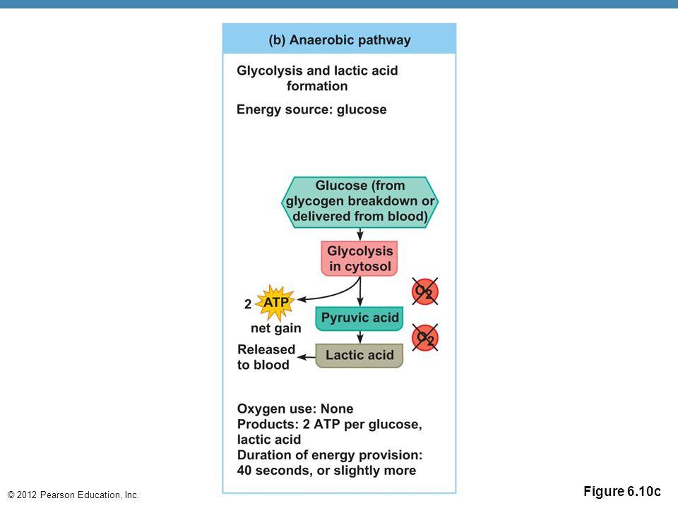 © 2012 Pearson Education, Inc. Figure 6.10c