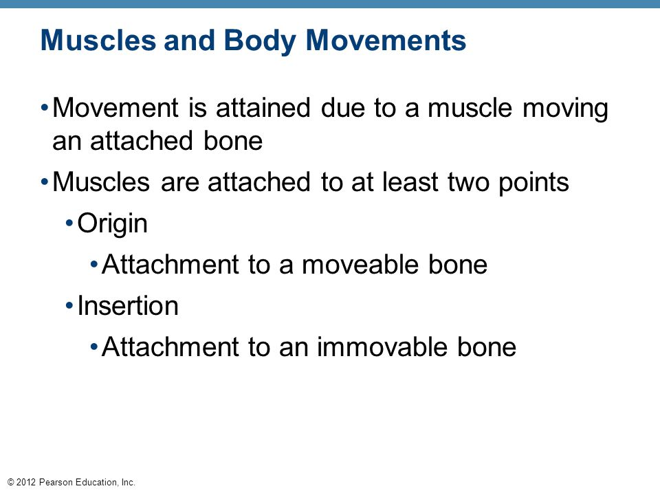 © 2012 Pearson Education, Inc. Muscles and Body Movements Movement is attained due to a muscle moving an attached bone Muscles are attached to at leas